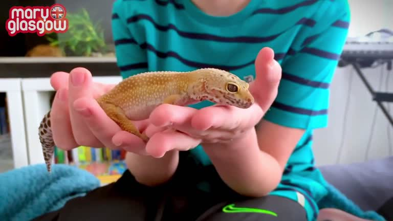 My Reptile Pet!