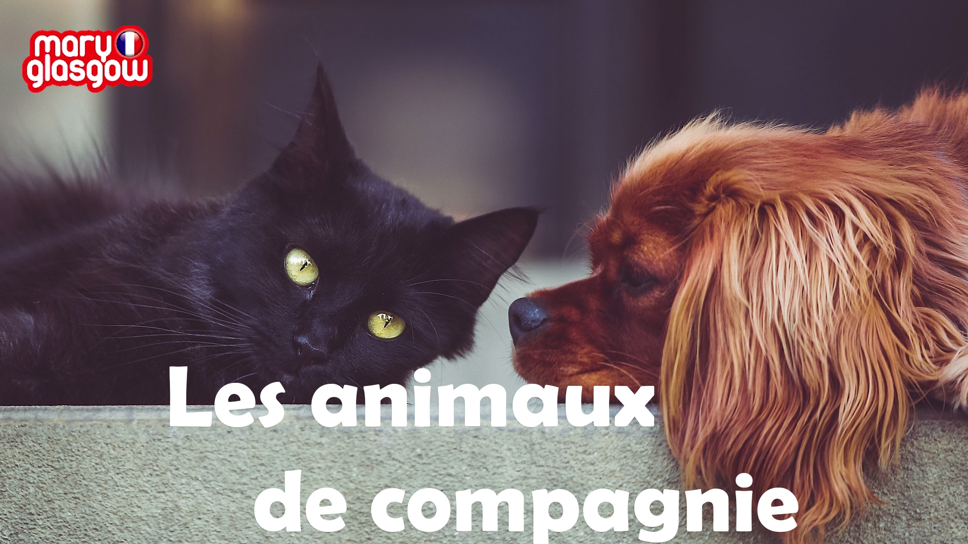 Les animaux screenshot