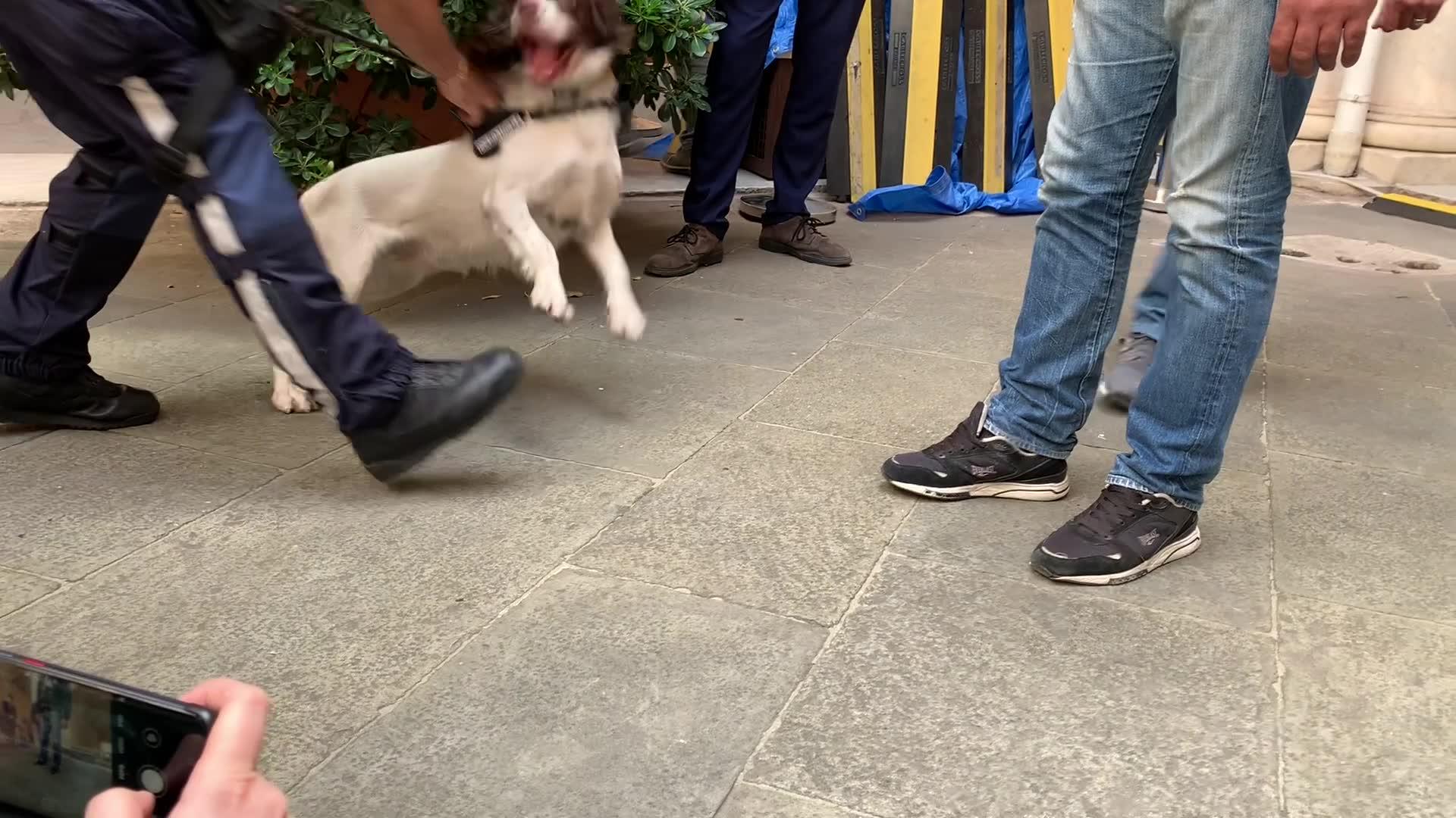 Ecco Nanuk, il nuovo cane antidroga della polizia locale di Genova