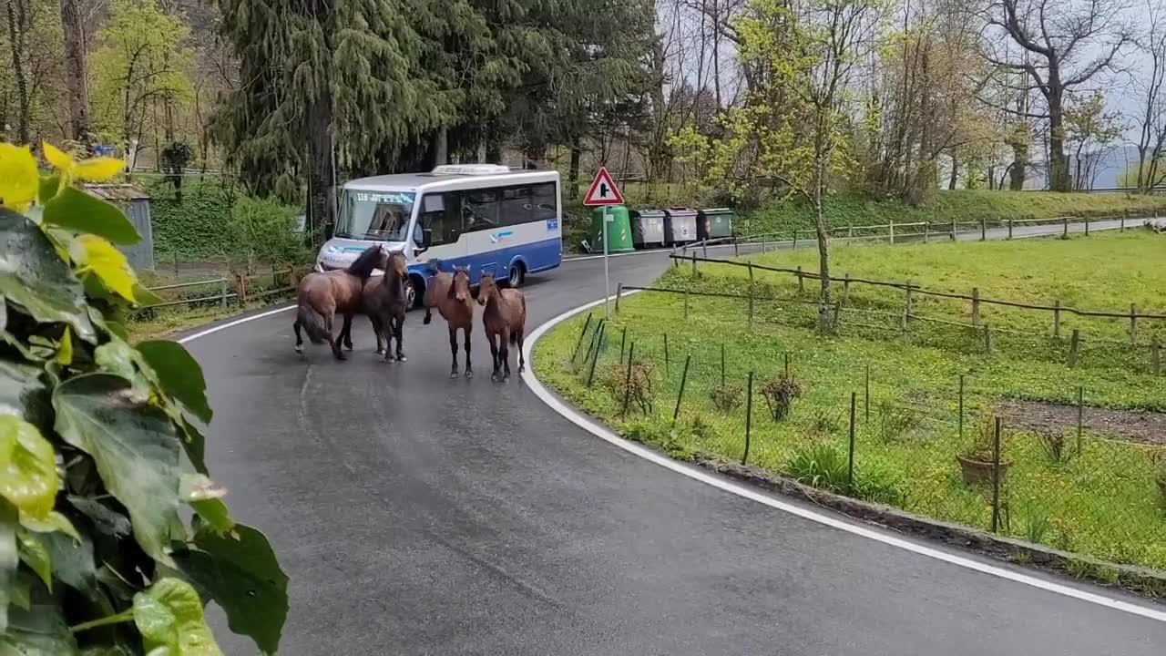 Mandria di cavalli selvaggi arriva a Bargagli: la gita equina nelle strade della Val Bisagno