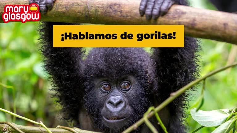 ¡Gorilas!