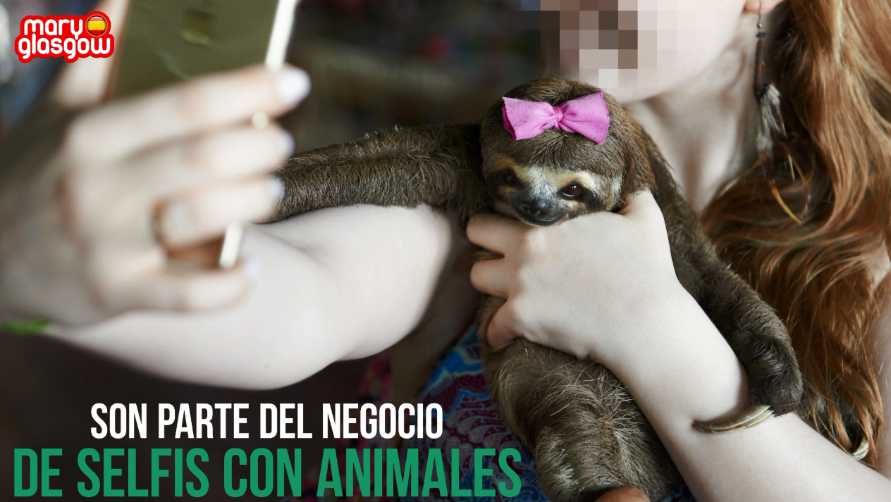 Código selfi: proteger a los animales