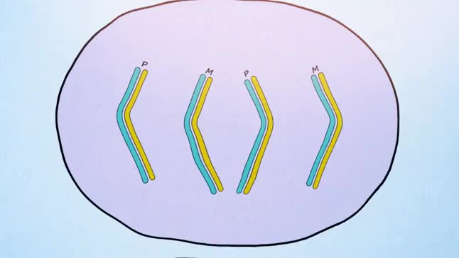 Animation of single-cell DNA template strand sequencing (Strand-seq)