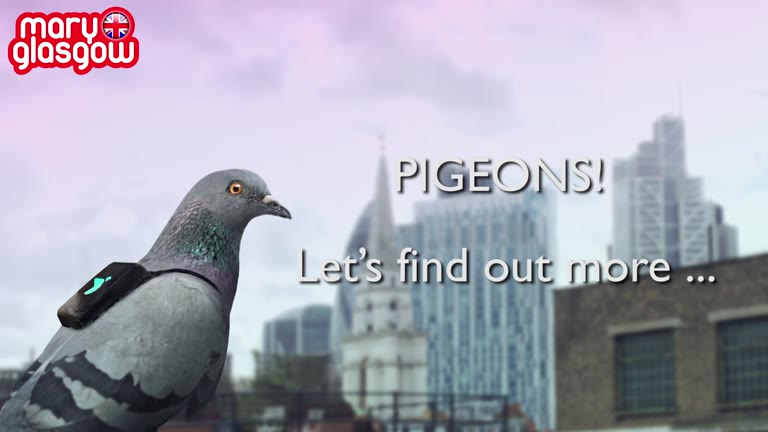 Pollution - and pigeons!