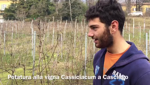Video: C'è un vigneto a Casciago…