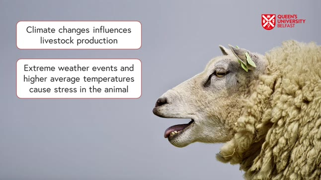 The Impact of Climate Change on Animal Health