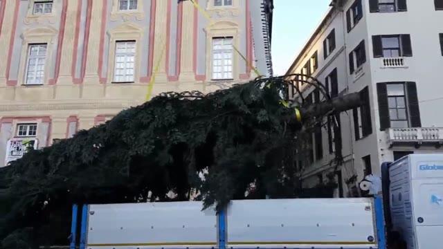 Video: L'arrivo del grande albero di Natale a De Ferrari