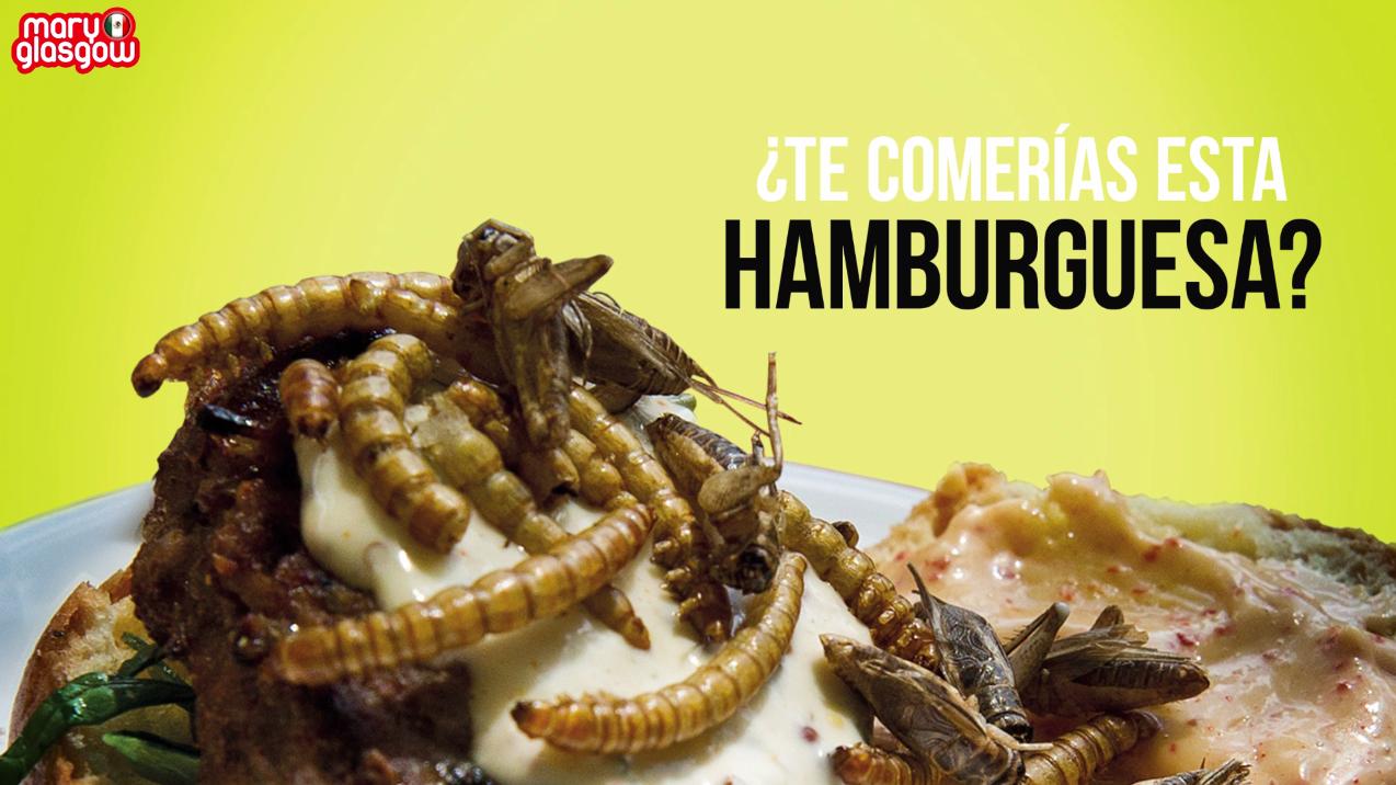 Insectos, ¿la comida del futuro?
