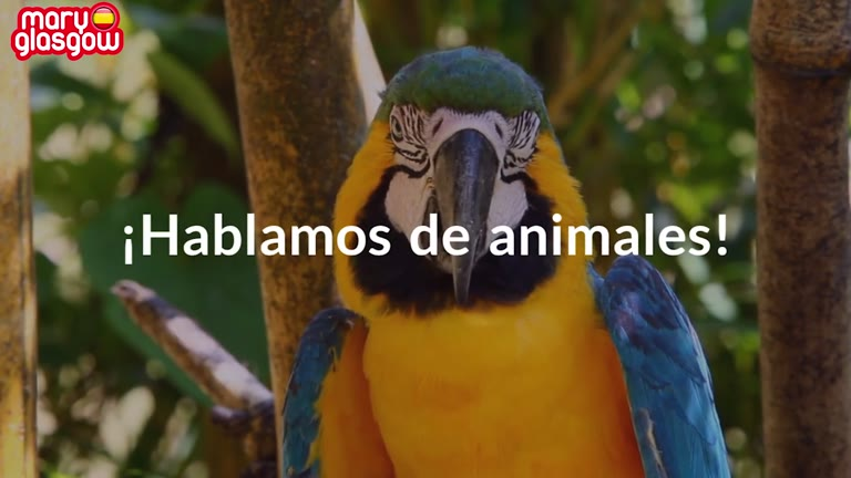 ¡Cuatro animales hispanos! screenshot