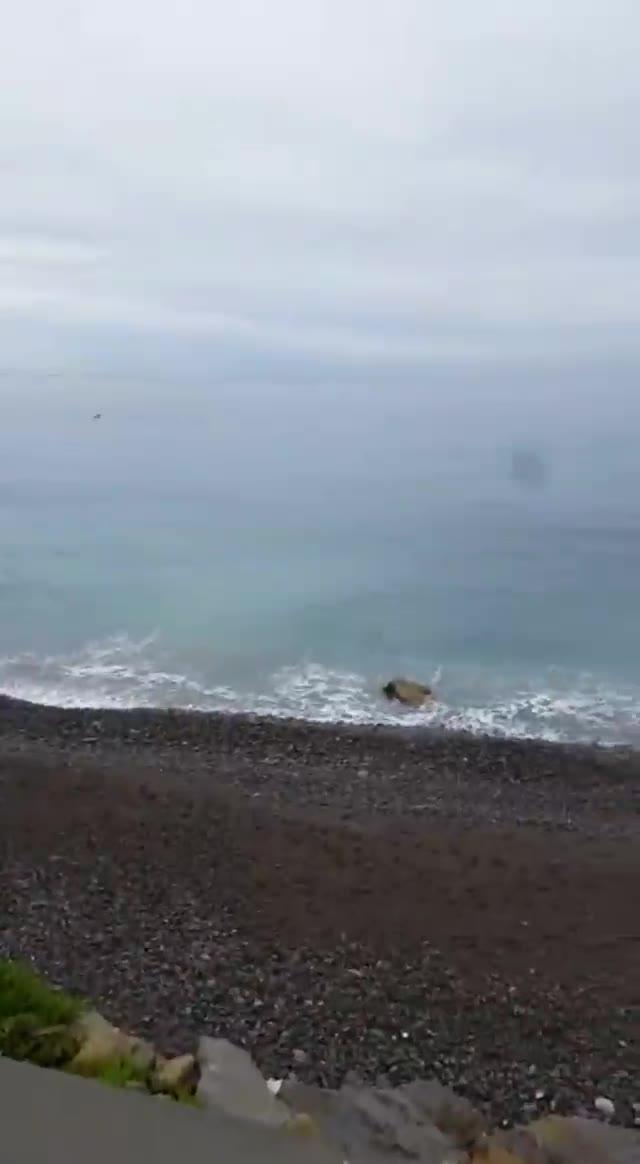 """""""Un mare di delfini"""", lo spettacolo sulle coste di Ospedaletti"""
