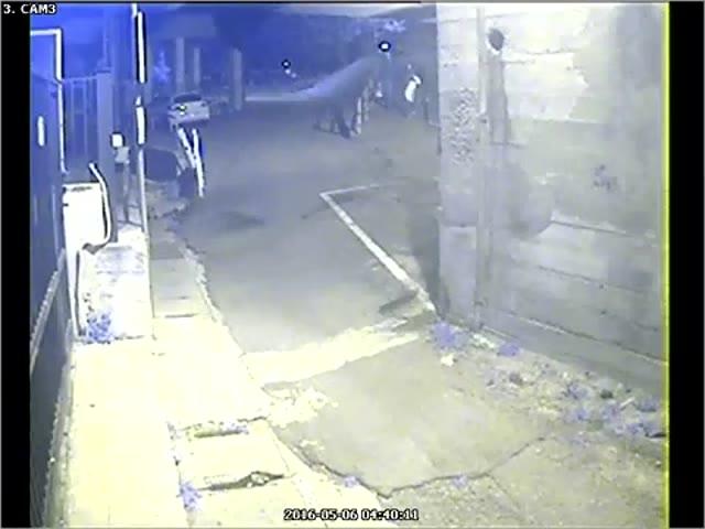 """Video: Filmati mentre abbandonano """"fido"""" davanti al canile di Savona"""