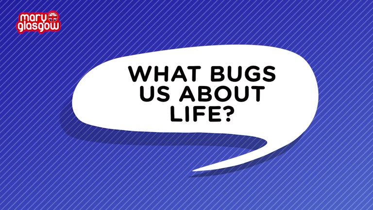WHAT BUGS US!
