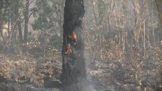 """Curto (Protezione civile Andora): """"Incendi non casuali"""""""