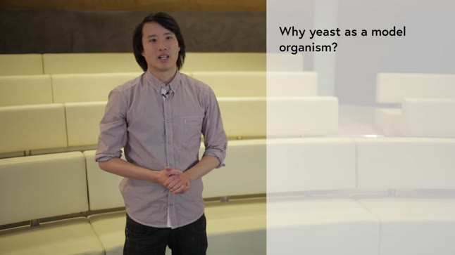 Baker's yeast as a model organism
