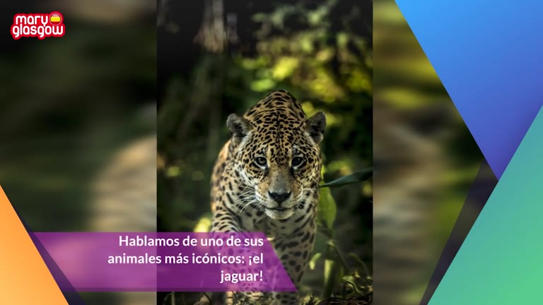 10 datos sobre los jaguares screenshot