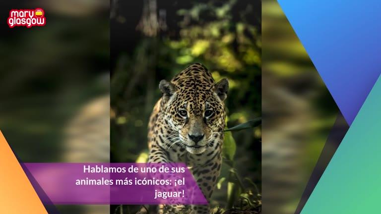 10 datos sobre los jaguares