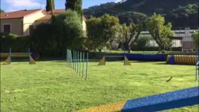 Video: Carlo Fazio e il cane Hindia ai campionati mondiali di agility-dog