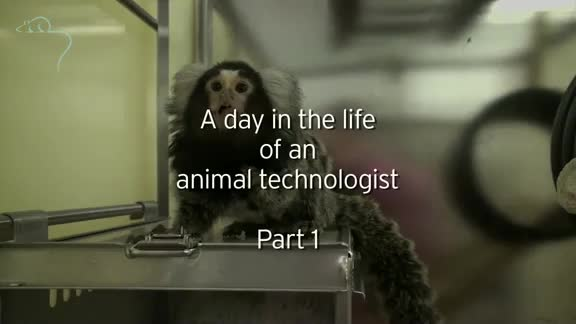 A day in the life of an animal technologist | Understanding Animal